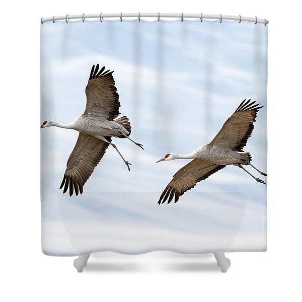 Sandhill Crane Approach Shower Curtain