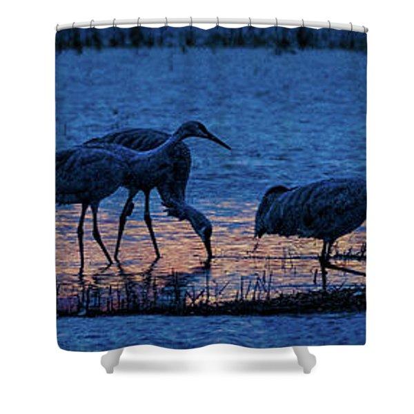 Sandhill Cranes At Twilight Shower Curtain