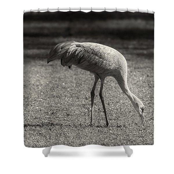 Sandhill Shower Curtain