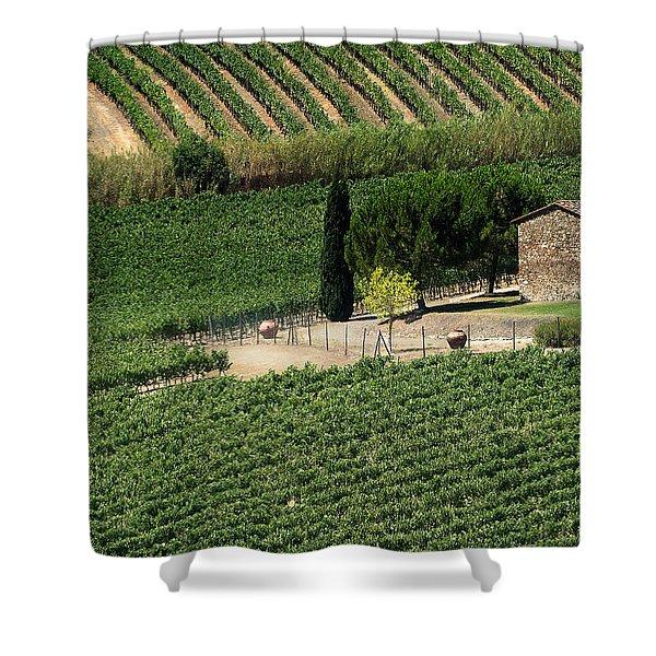 Sangiovese Vineyard Shower Curtain