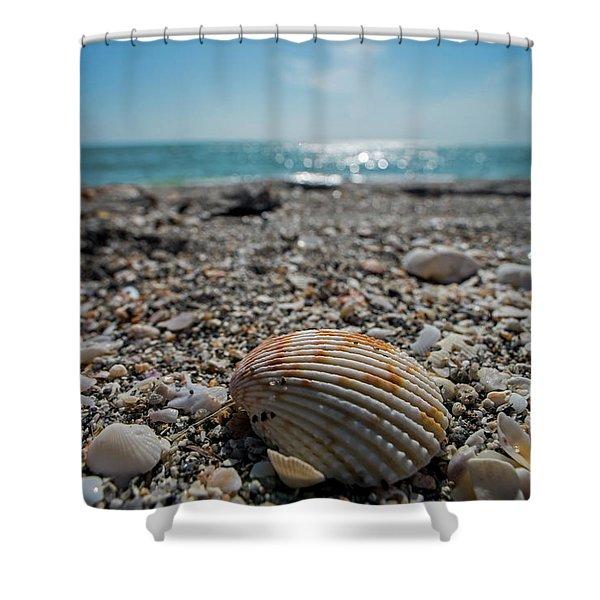 Sanibel Island Sea Shell Fort Myers Florida Shower Curtain