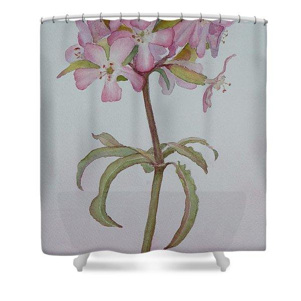 Saponaria Shower Curtain