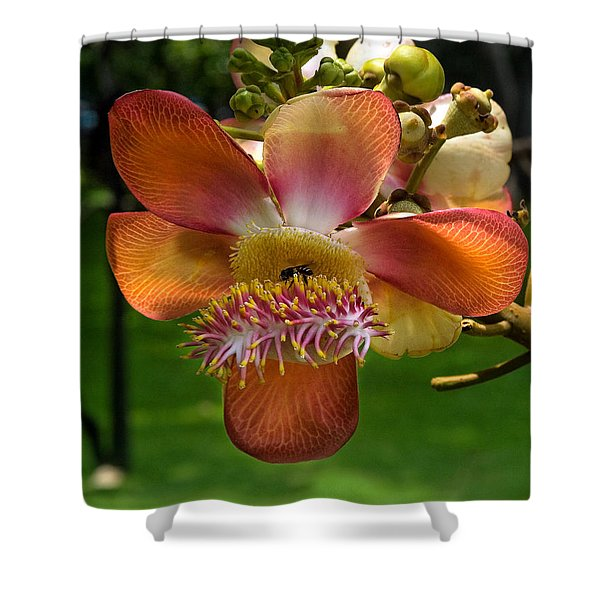 Sara Tree Flower Dthb104 Shower Curtain