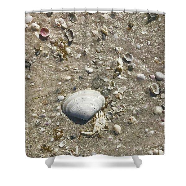 Sarasota County Shells Shower Curtain