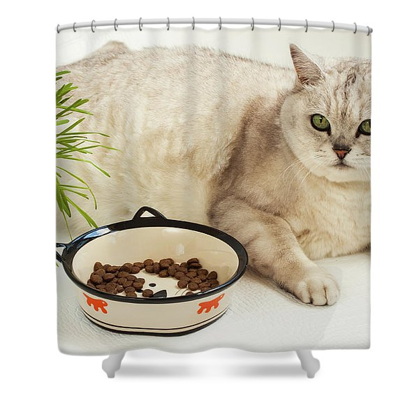 Sated Cat Shower Curtain