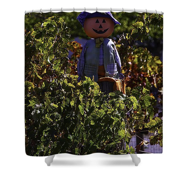 Scarecrow In The Vineyards Shower Curtain