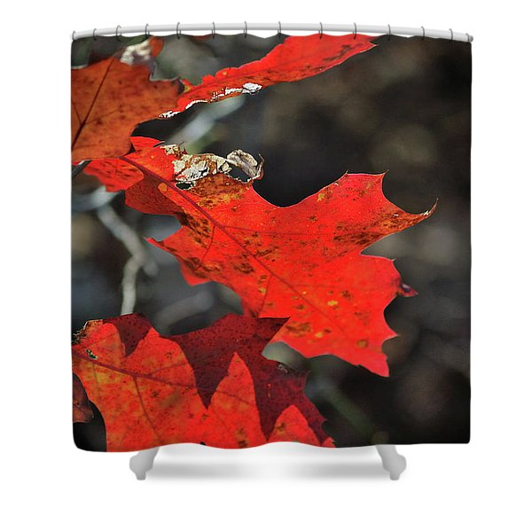 Scarlet Autumn Shower Curtain