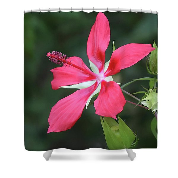 Scarlet Hibiscus #4 Shower Curtain