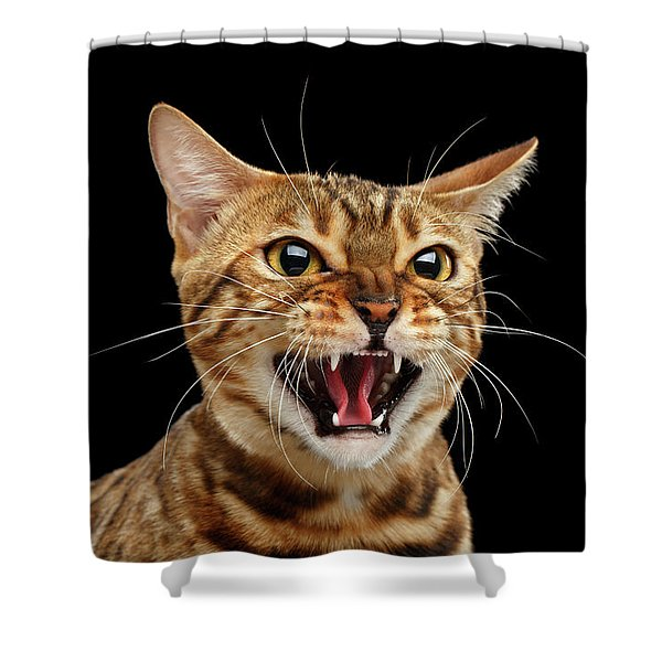 Scary Hissing Bengal Cat On Black Background Shower Curtain