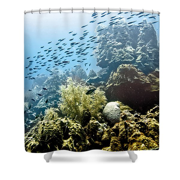Shower Curtain featuring the photograph School Fish Rainbow by Perla Copernik