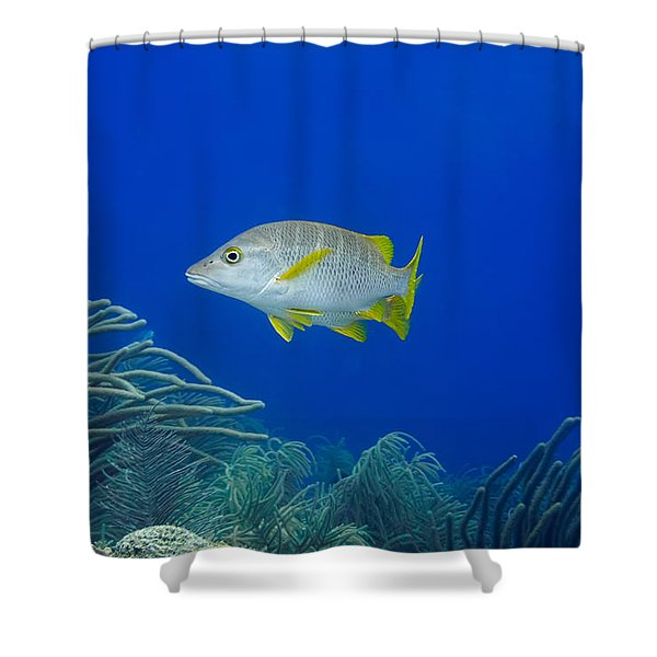 Shower Curtain featuring the photograph Schoolmaster Snapper by Perla Copernik