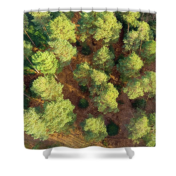 Scots Pines Shower Curtain