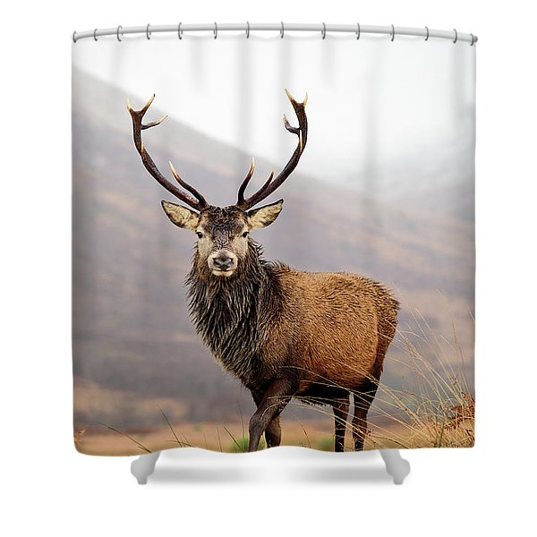 Scottish Red Deer Stag - Glencoe Shower Curtain