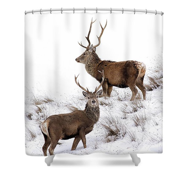Scottish Red Deer Stags Shower Curtain