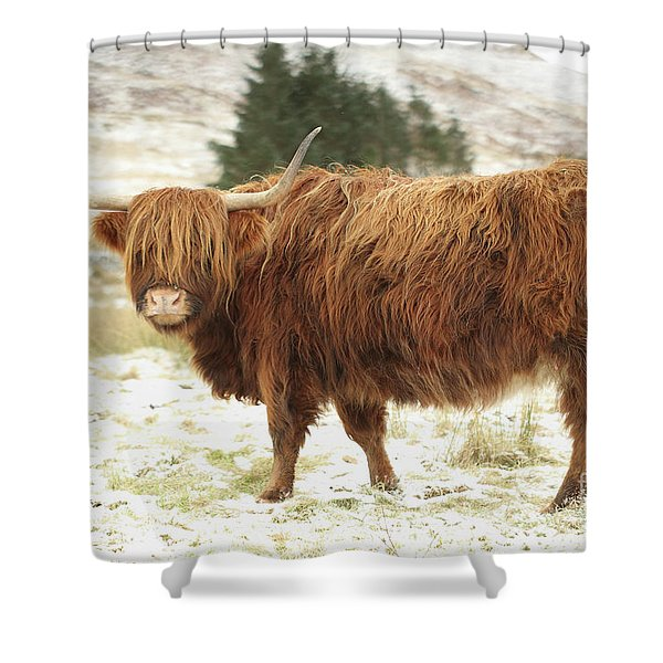 Scottish Red Highland Cow In Winter Shower Curtain