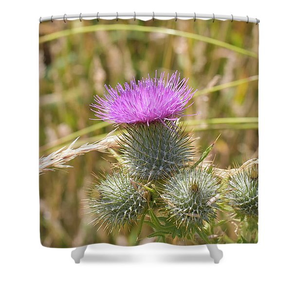 Scottish Thistle Shower Curtain