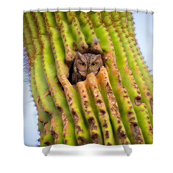 Screech Owl In Saguaro Shower Curtain