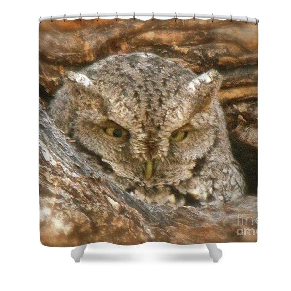 Screech Owl On Spring Creek Shower Curtain