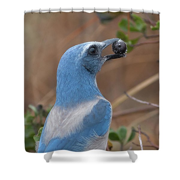 Scrub Jay With Acorn Shower Curtain