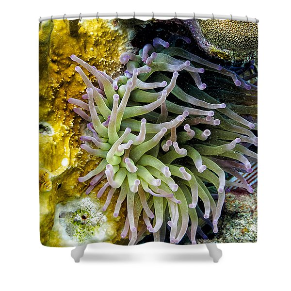 Shower Curtain featuring the photograph Sea Anemone And Squirrelfish by Perla Copernik