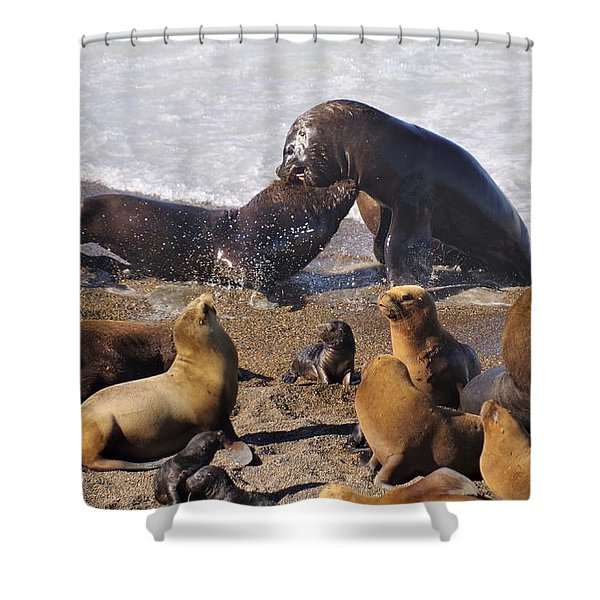 Sea Elephants Shower Curtain