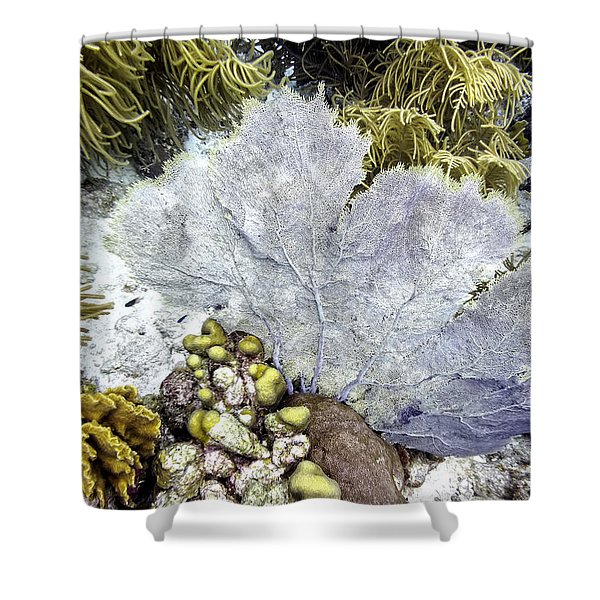 Shower Curtain featuring the photograph Sea Fan Coral by Perla Copernik