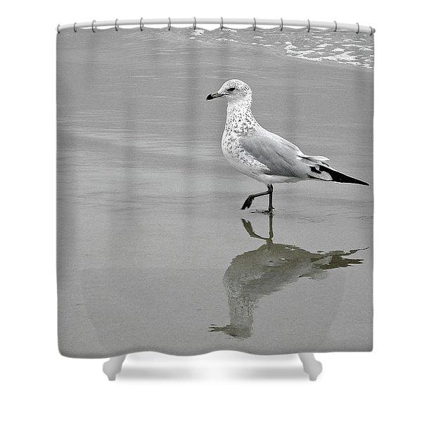 Sea Gull Walking In Surf Shower Curtain