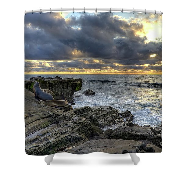 Sea Lions At Sunset Shower Curtain