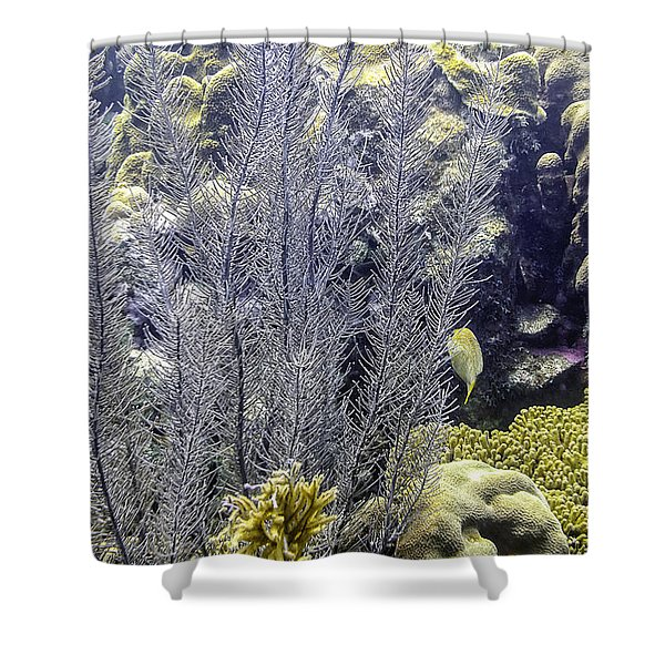 Shower Curtain featuring the photograph Sea Plumes Coral 2 by Perla Copernik