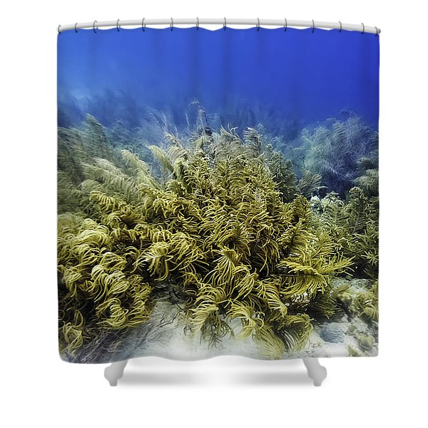 Shower Curtain featuring the photograph Sea Rod Corals  by Perla Copernik