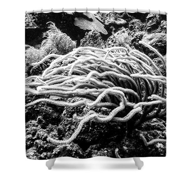 Sea Rods In Movement Shower Curtain