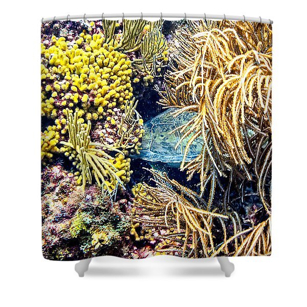 Shower Curtain featuring the photograph Sea Turtle Hiding by Perla Copernik