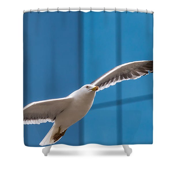 Seabird Flying On The Glass Building Background Shower Curtain