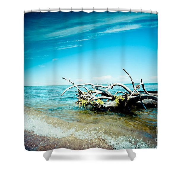 Shower Curtain featuring the photograph Seacost With Old Tree In Water Kolka by Raimond Klavins