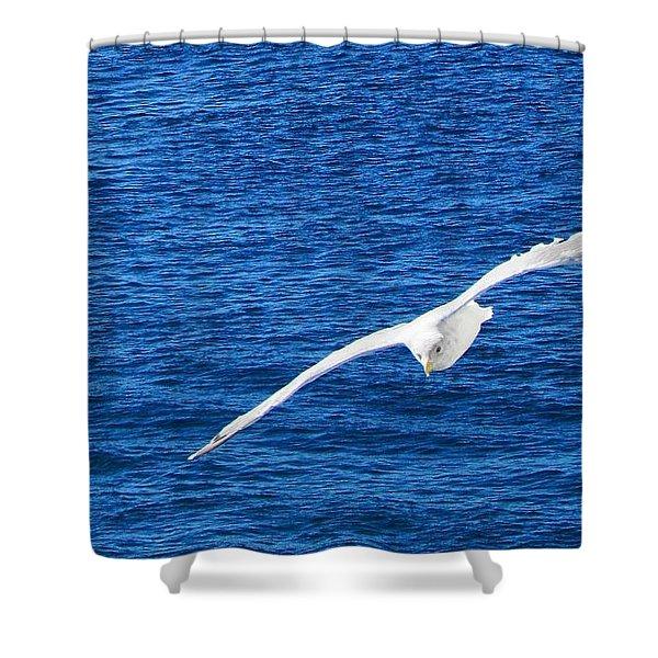Seagull 1 Shower Curtain