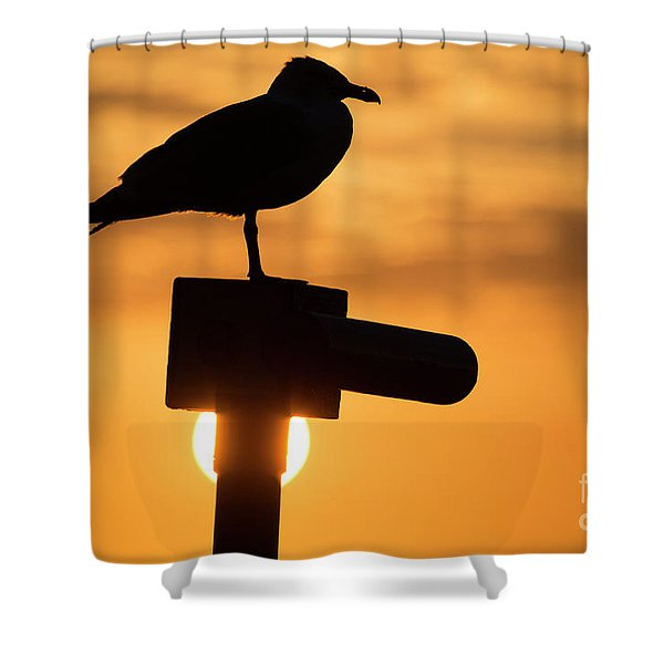 Seagull At Sunset Shower Curtain