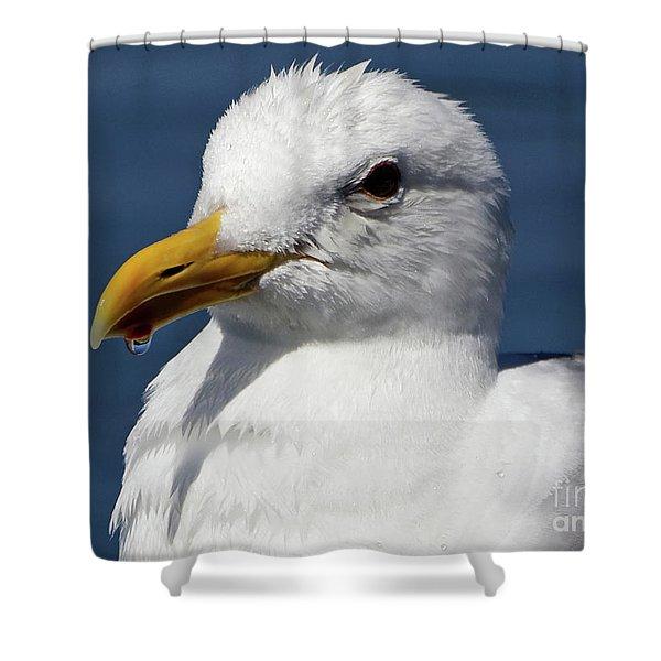 Seagull Drip  Shower Curtain