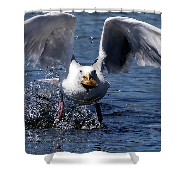 Seagull Flight Shower Curtain