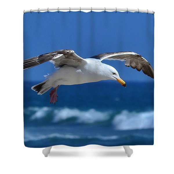 Seagull In Flight Shower Curtain