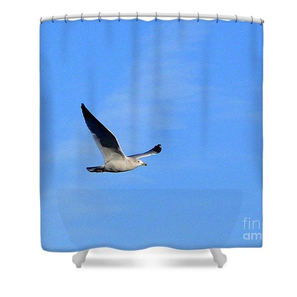 Seagull In Flight Shower Curtain