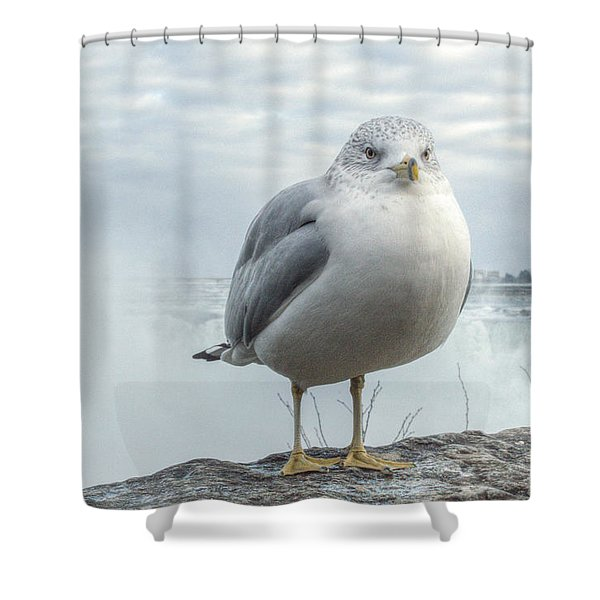 Shower Curtain featuring the photograph Seagull Model by Garvin Hunter