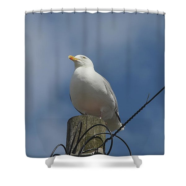 Seagull Perching. Shower Curtain