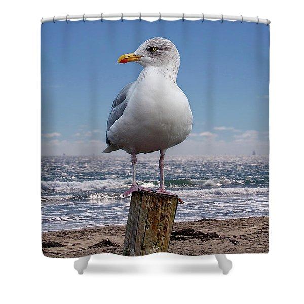 Seagull On The Shoreline Shower Curtain
