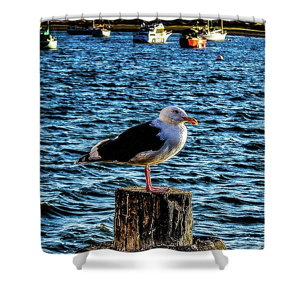 Seagull Perch Shower Curtain