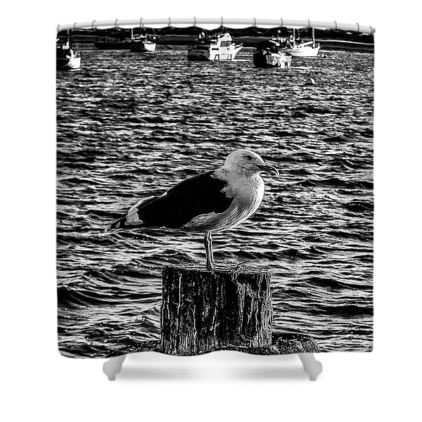Seagull Perch, Black And White Shower Curtain