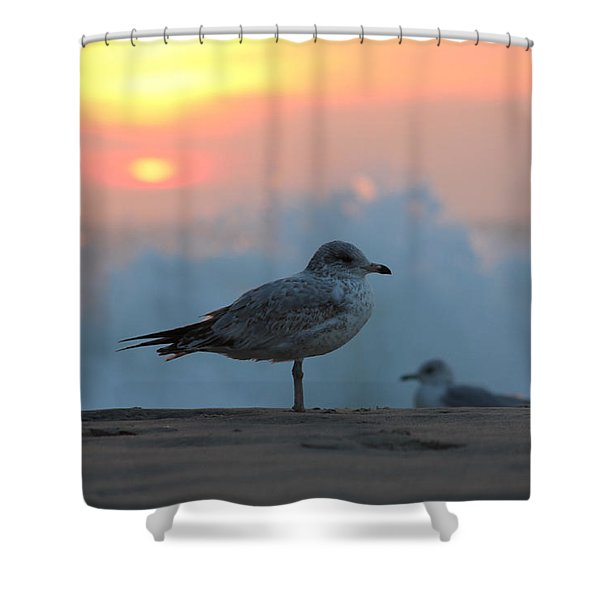 Seagull Seascape Sunrise Shower Curtain