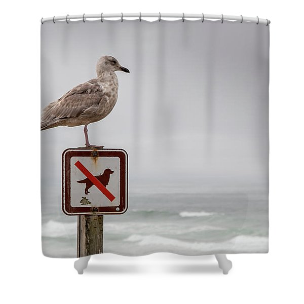 Seagull Standing On Sign And Looking At The Ocean Shower Curtain