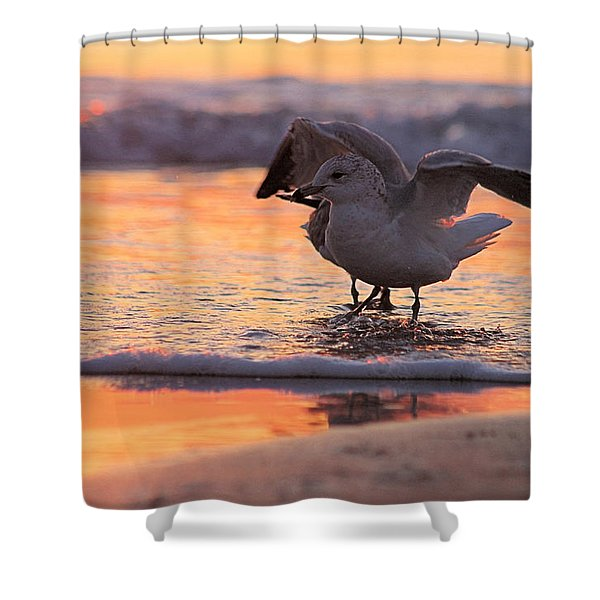 Seagull Stretch At Sunrise Shower Curtain