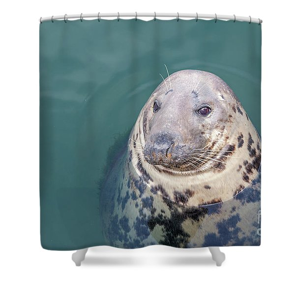 Seal With Long Whiskers With Head Sticking Out Of Water Shower Curtain