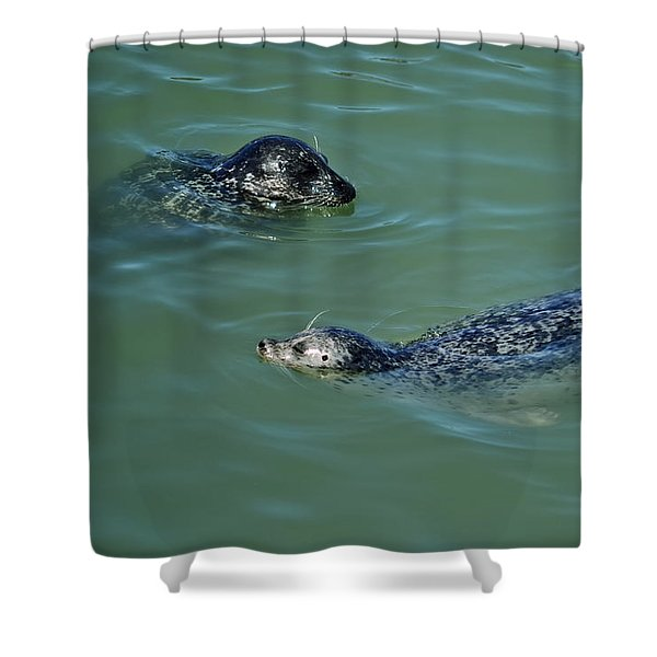 Sealion Friends Shower Curtain